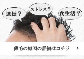 薄毛の原因とは?